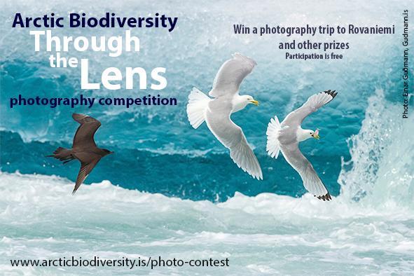 Призеры конкурса, посвященного сохранению природы Арктики - русские фотографы