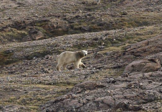 Фото: ArcticCommand